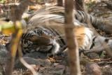 Indian Wildlife 2006