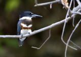 Kingfisher_19.JPG