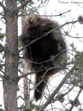 Porcupine 8.jpg