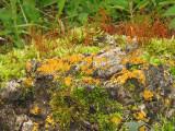 Lichen and moss garden 3a.jpg