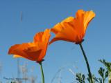 Wildflowers etc. of British Columbia