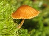 Mushroom N2a.jpg