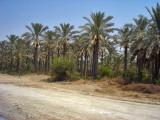Palms &  Dates