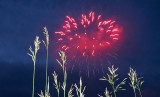 How a mouse sees fireworks