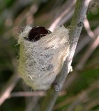 molted furry caterpillar?