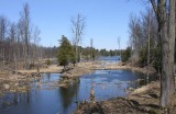 Beaver dam at end of Loon Lake