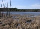 Purdon Bog - small lake adjacent to bog