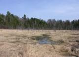 Baird Woods wetland