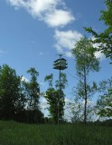 Birdhouse near lagoon