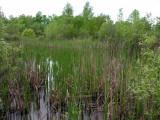 small-marsh.jpg
