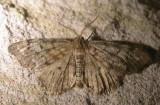 metallic-moth-17-06-2007.jpg