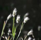 Summer Grasses-7