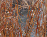 Cattails-Abstract-5