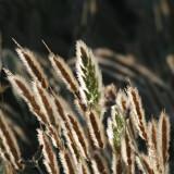 June-Grasses-5