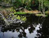 Black Water Glade