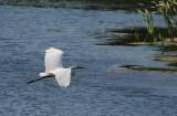 Flight-over-Water