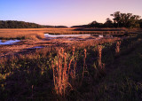 Marsh-Edge