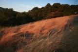 Autumn-Grass-WS.jpg