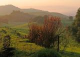 Evening Vista.jpg