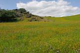 Wildflower Field.jpg