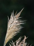 Autumn-Grasses-3