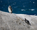 South Africa, Penguins