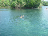 A WAVE FROM THE MANATEE WATCHER