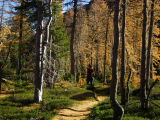 Larch Forest