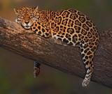 Wild animal Images
