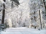 Wisconsin December 2006