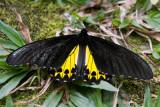 Bali Butterfly park