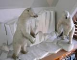 Polar Exploration Exhibit
