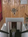 Bathroom Protected by Reindeer