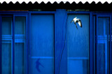 BLUE WINDOWS