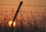The Sunset Beyond Gaza