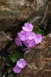 Fiore - Da classificare