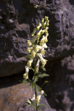 Fiore da classificare