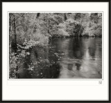 New Jersey Pine Barrens-2