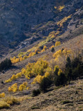 Brushed With Color  June Lake Loop, California  October 2006