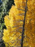 Skeleton Bridgeport, California  October 2006
