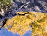 Nature's Palette  June Lake Loop, California  October 2006