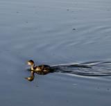 Orange Eye Mono Lake, California, October 2006
