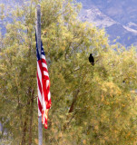 Farewell Death Valley, California  February 2007