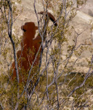 Remembered Miner  Rhyolite, Nevada  February 2007