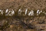 Ghost Town Ghosts Rhyolite, Nevada  February 2007