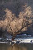 Glorious Winter Light Kern River Canyon, California, February 2007