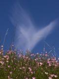 Blessings Two Di Rosa Preserve, Napa County, California, June 2007