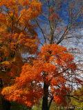 Autumn in the Carolinas - October 2006