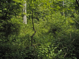Dial Creek thicket