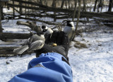 Liz feeding black-capped chickadees  ©  Liz Stanley